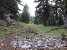As I got further up the trail traces of snow started to appear.
