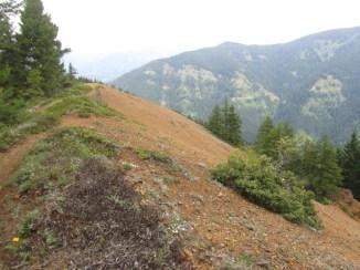Open Ridge the trail crosses