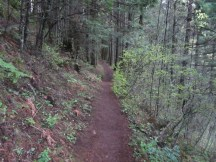 A section of Trail.