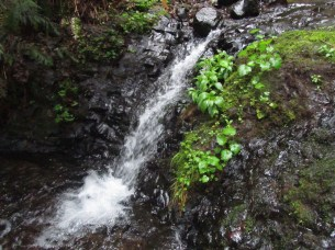A small cascade down form the large fall.