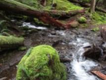 Wisky Creek