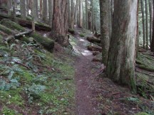 This section of the trail is in old growth forest.