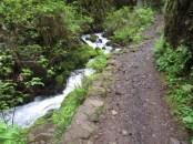 The creek follows the creek up through a narrow canyon