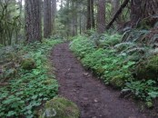 Trail heading to Devils Rest Trail