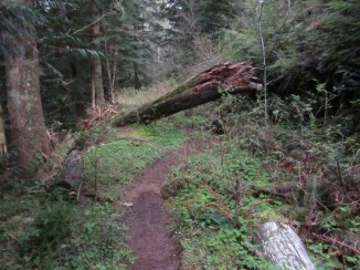 Start of Primrose trail with some old blow down.