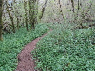 The trail earned it name this trip. Many wild roses in bloom and very green.