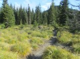 Now hiking the last part of the trail through bear grass in the sun.
