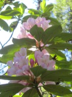 We caught the rhododendrons at their peek.