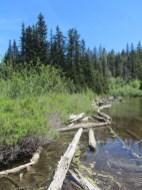 Shore line of Mirror Lake.