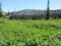 We did a little side trip so everyone could see Elk Meadows.