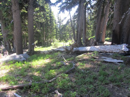 The trail climbs from Elk Meadows through old growth hemlock up to timberline.
