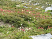 A nice display of Indian Paint Brush and some glacier Lillies.
