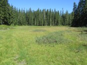Chenamus Meadow