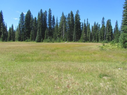Found a new meadow