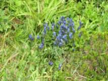 Rainier - Flowers