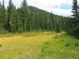 Last look from a meadow opening of Bird Mt.