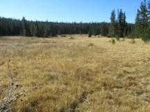 Bonney Meadow