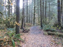 A trail system surrounds the Forest Center.