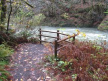 The trail by the Wilson River has a number of view points.