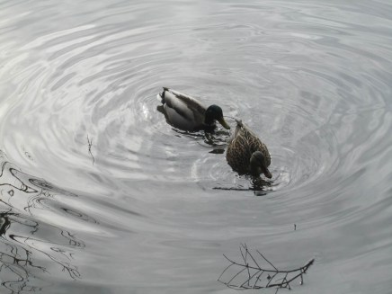 Lots of water fowl can be found here at times.