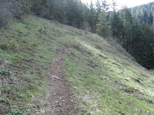 The trail crosses this opening that in spring has flowers.