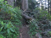 There were several place where blow down blocked the trail.