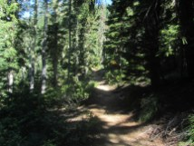 The trail climbs through old growth then sub-alpine forest.