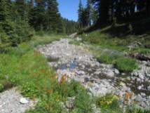 Still water in the creek
