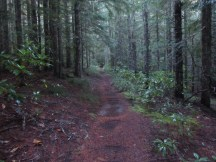 This hike is a gradual up hill through the woods.