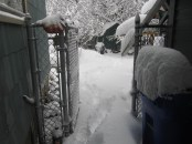 Out the side door to the back yard.