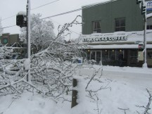 Starbucks was open and busy. Many trees and limbs were down.