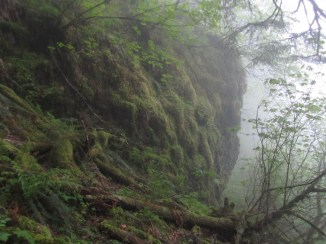 Fog and mossy cliff.