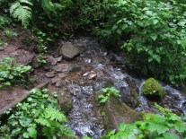 The start of Wahkeena Creek.