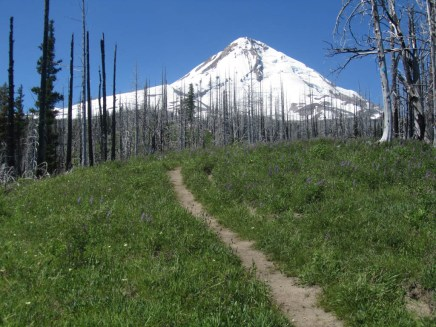 Mt. Hood starts to come into view further up the trail.