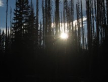 Sun setting through the burnt trees. Tomorrow I would hike back up to Sisi Butte to see the eclipse.