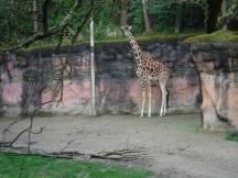 Zoo_DSCF1537