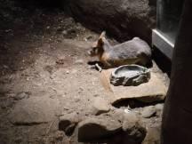 Zoo_DSCF1551