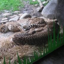 Zoo_IMG_4913