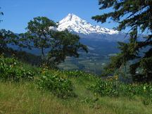 Lots of great views of Mt. Hood from many sections of the trail
