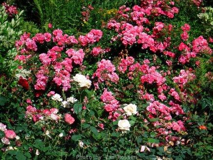 RoseGarden_DSCF2514