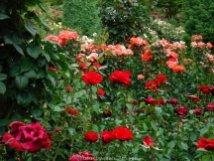 RoseGarden_DSCF2534