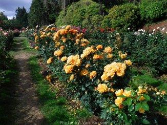 RoseGarden_DSCF2619