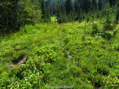 TimberlineTrail_IMG_9494