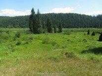 Lone Butte Meadow
