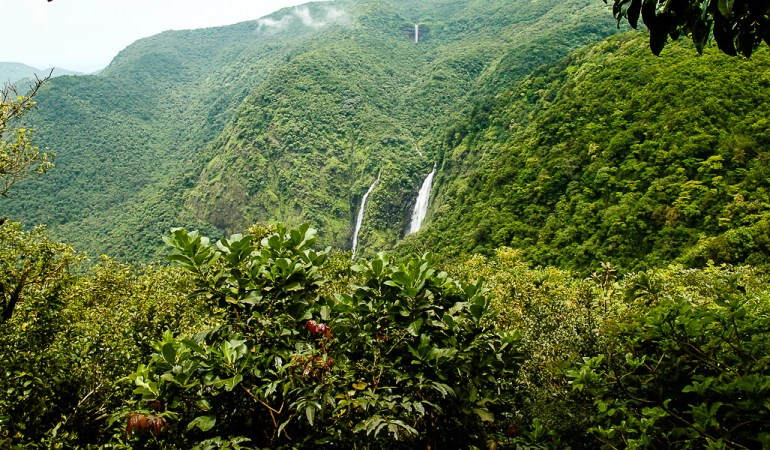 The Enchanted Forests of Goa