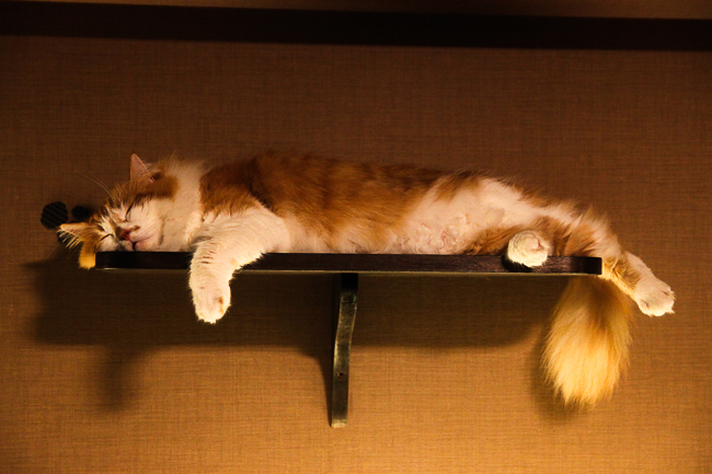 Cats find the oddest places for a nap
