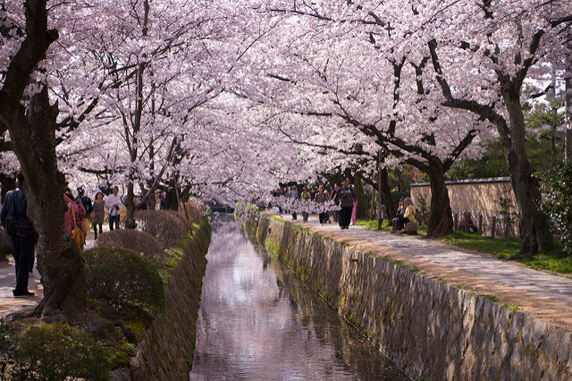 The Philosopher's walk in spring is a riot of cherry blossom blooms. I hope to visit again someday to experience this. (Pablo Padierna/flickr)
