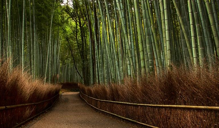 The Magical Bamboo Forest of Arashiyama