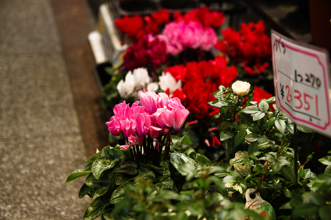 Seafood is not the only thing you can find in Nishiki. Lots of fresh flowers are available here as well