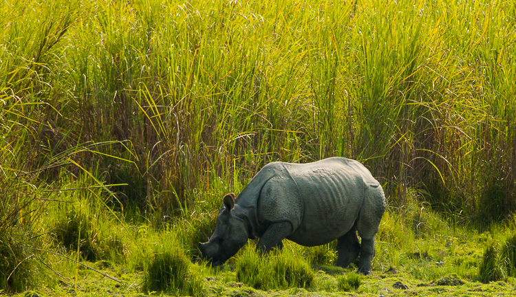This was one of the first Rhinos we saw up-close